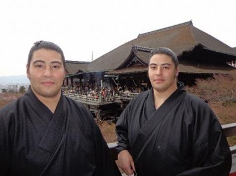 大相撲総選挙2017イケメン力士 藤の海と藤の花