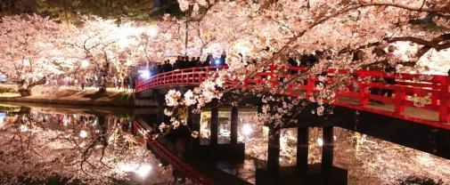 弘前桜祭り ライトアップ