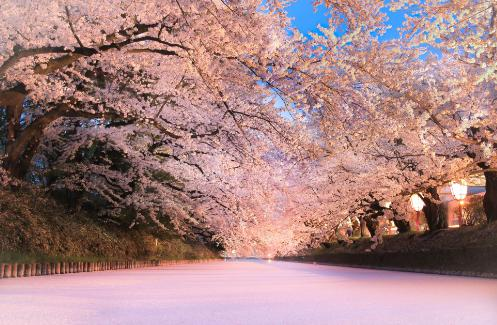 弘前桜祭り 混雑状況