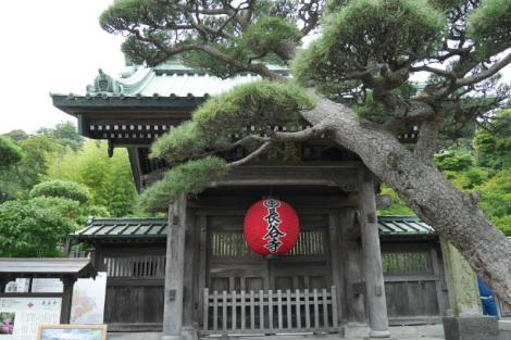 紫陽花スポット 長谷寺