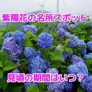紫陽花スポット
