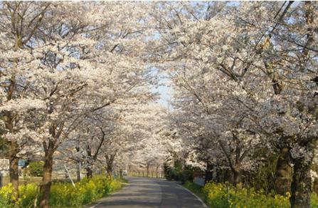 花見2019関東の穴場や人気スポット10