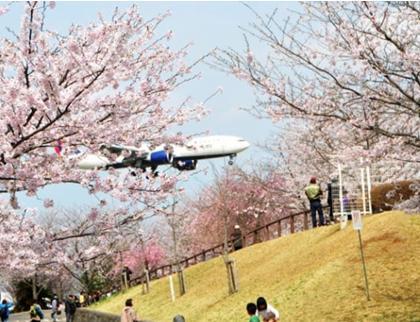 花見2019関東の穴場や人気スポット15