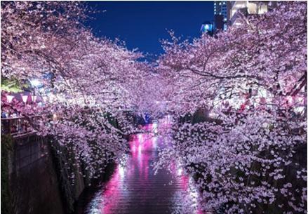 花見2019関東の穴場や人気スポット2