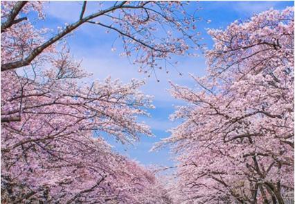 花見2019関東の穴場や人気スポット5