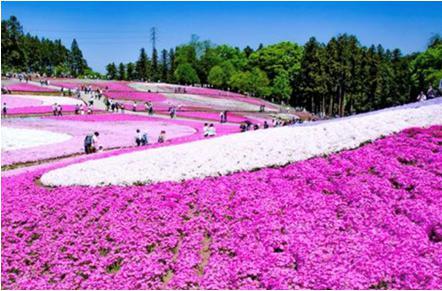 花見2019関東の穴場や人気スポット9