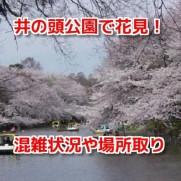 井の頭公園花見