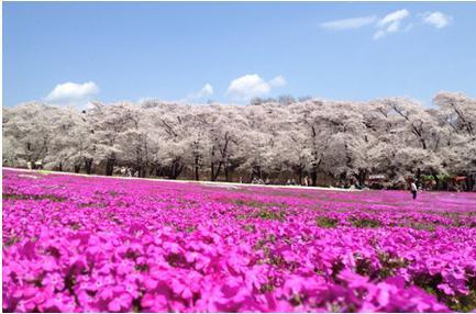 花見2019関東の穴場や人気スポット11
