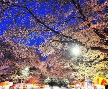 花見2019関東の穴場や人気スポット14