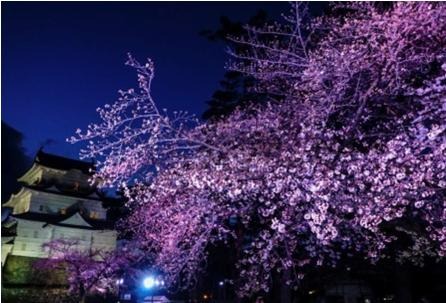 花見2019関東の穴場や人気スポット6